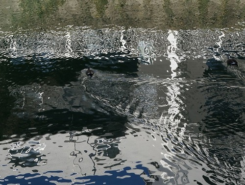 運河鳥07964.jpg